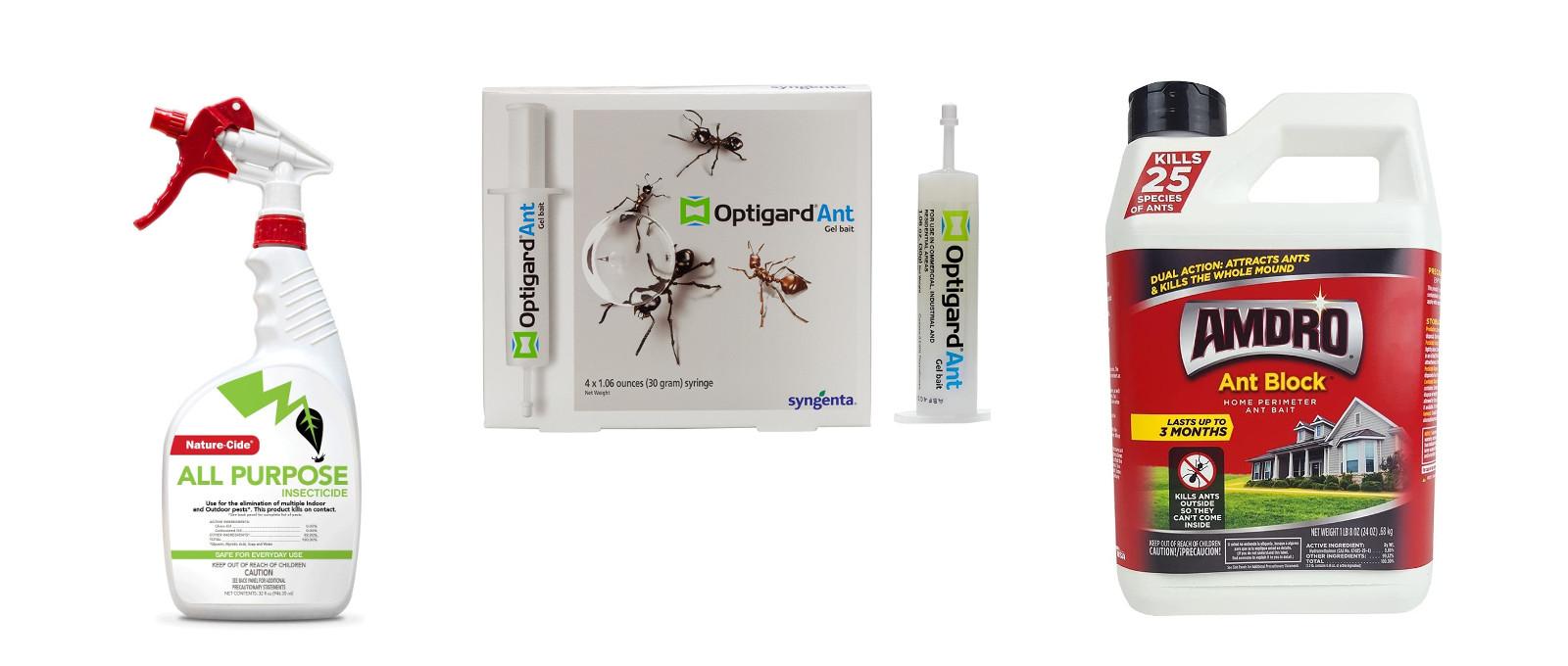 Ant killer and bait